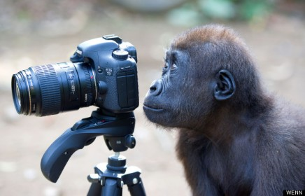 DWP london zoo photo competition 260912