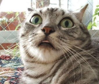 Scared+cat